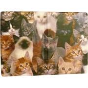 Обложка для паспорта «котики»