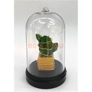 Кактус свеча (R2-425) в стеклянной колбе с гирляндой