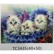 Алмазная мозаика (TC3435) Кошки 40x50