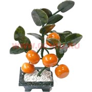Мандариновое дерево 5 плодов
