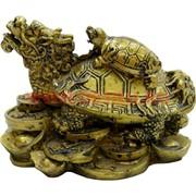 Черепаха-дракон малая