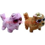 Собачки гавкающие ходящие в шляпке и очках