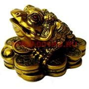 Жаба на монетах средняя