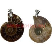 Подвеска кулон «Аммонит» большой натуральная окаменевшая ракушка