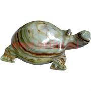 Черепаха 15-16 см, оникс (6 дюймов)